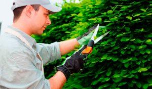 servicios-jardineria-2